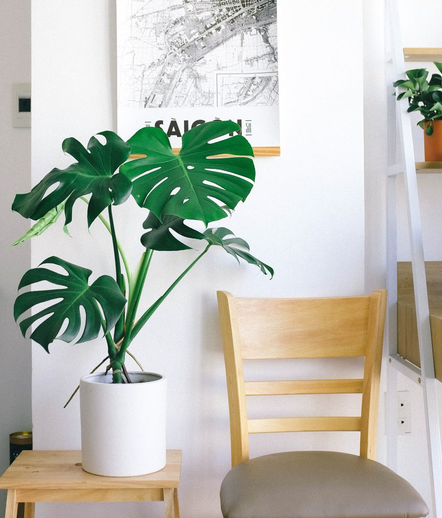 wall painting, accent wall, tapestry, wallpaper, apartment decor, decorating, interior design, apartment style, boho-style apartment, boho-style wall, apartment living, renting an apartment, potted plant