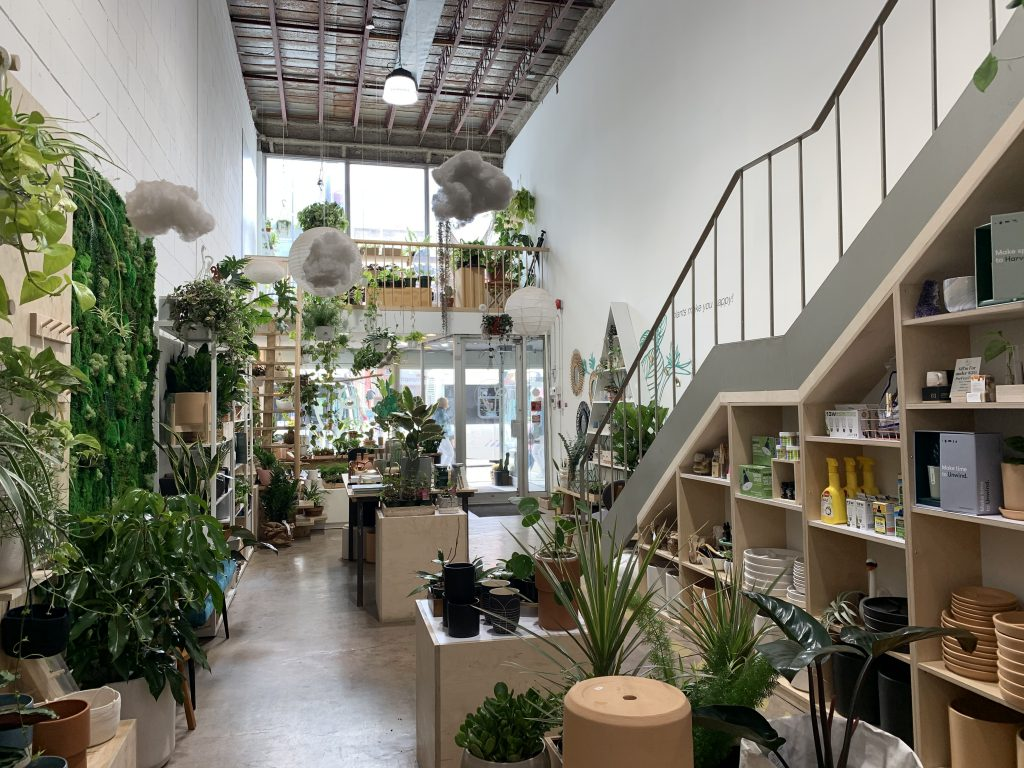 Verde Plant Shop, Finding Your (Houseplant) Match, indoor plants, apartment living, living in an apartment, downtown winnipeg apartment living. winnipeg apartments, apartments in winnipeg, indoor plants, winnipeg apartment indoor plants