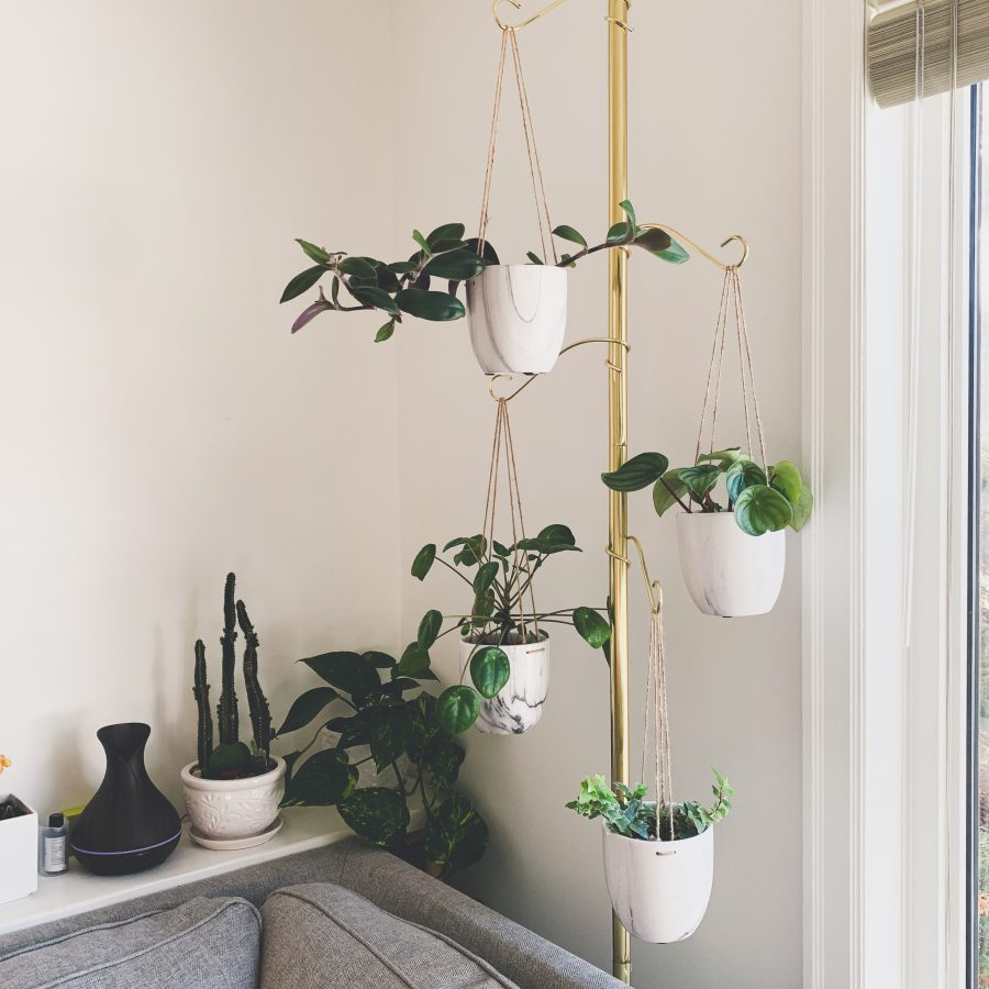 Finding Your (Houseplant) Match, indoor plants, apartment living, living in an apartment, downtown winnipeg apartment living. winnipeg apartments, apartments in winnipeg, indoor plants, winnipeg apartment indoor plants