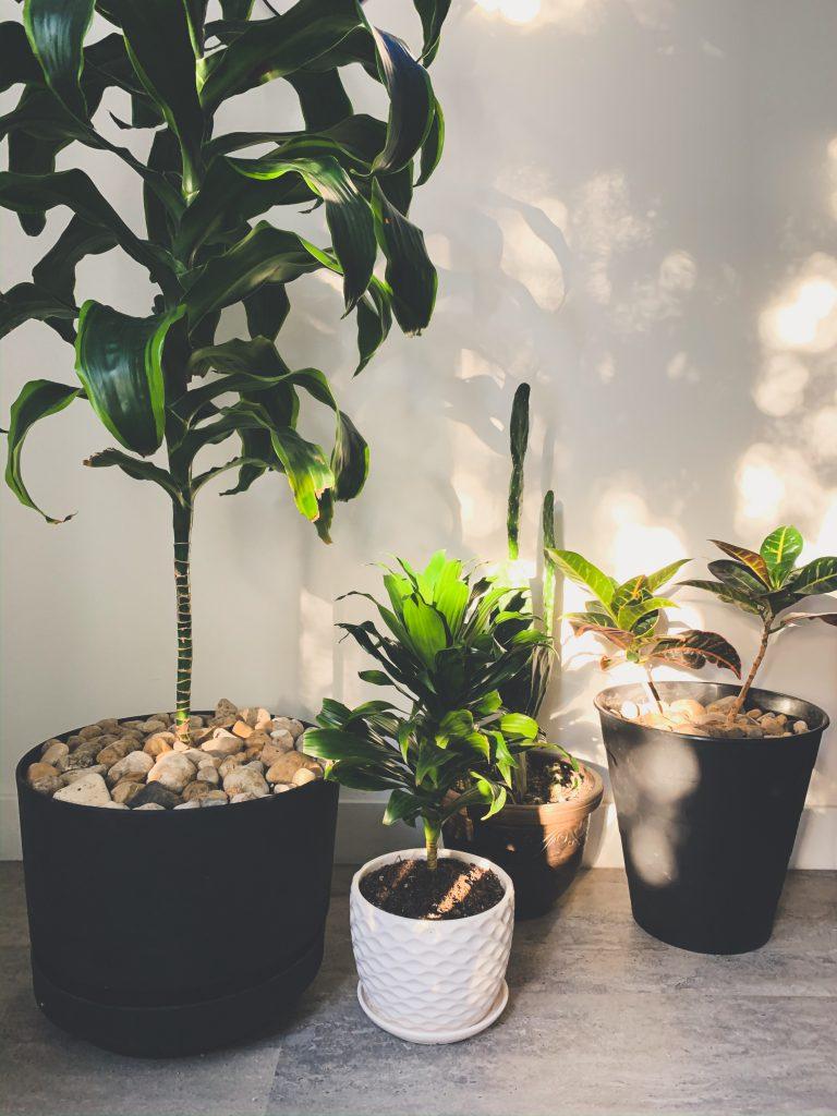 plants, indoor plants, house plants, apartment living, winnipeg apartments, apartments in winnipeg, downtown living in winnipeg, winnipeg downtown living, downtown lifestyle